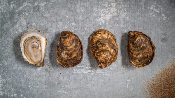 Large Choice Cascumpec Bay Oysters
