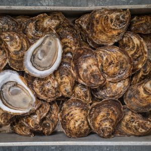 Cascumpec Bay Oysters